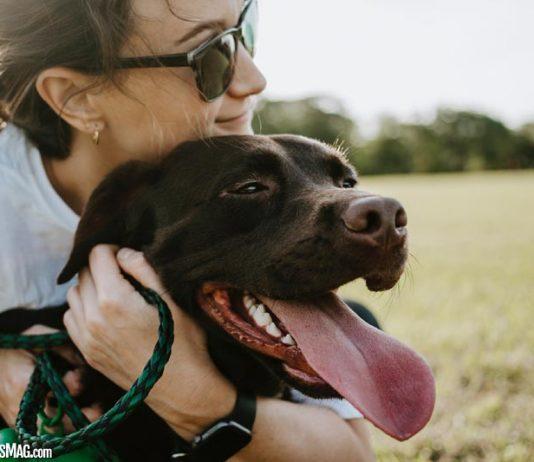 Ways to Make Your Dog Happy