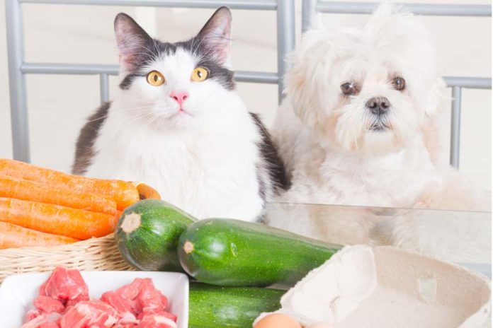 Why Your Pet Needs Organic Food, organic pet food benefits, benefits of all natural pet food, benefits of feeding high quality dog food, benefits of dog food, top organic dog food, home cooked dog food recipes, best organic puppy food, beneful dog food,