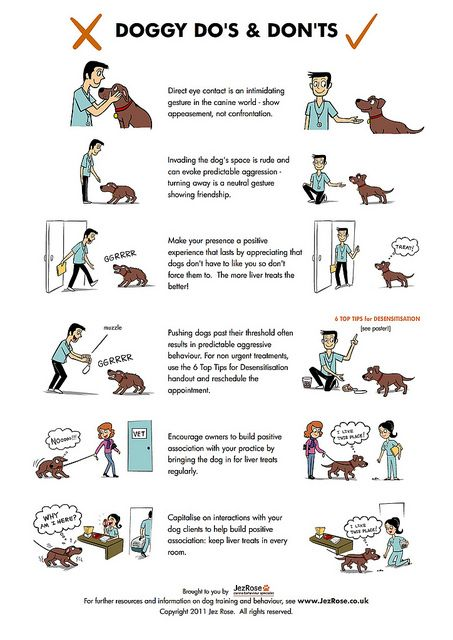 How to keep your kids safe around animals
