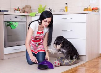 10 Tips to Keep Your House Clean While Having a Dog, keeping house clean with german shepherd, how to keep house from smelling like dog, how to keep a house clean and organized, electrostatic mop dog hair, spotless paw glove, how to keep house clean with cats, how to keep a big dog clean, what do you do to keep the pet clean,