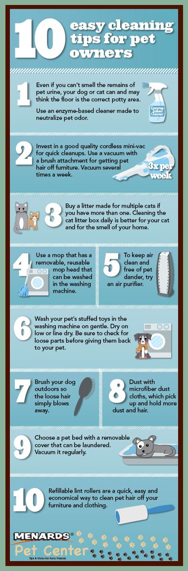 Keep Your House Clean While Having a Dog