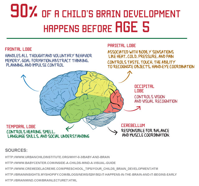 Child's brain development