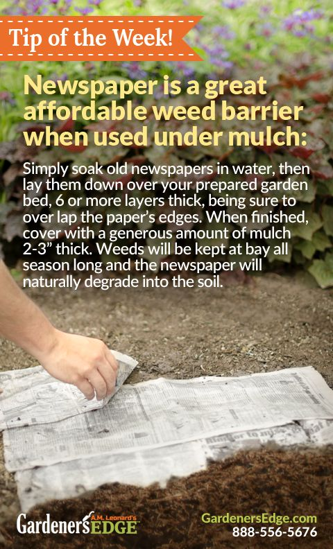 newspaper as weed barrier