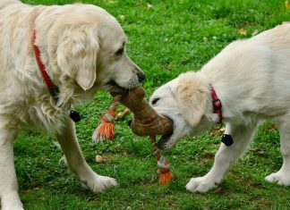 5 Tips to for Buying the Best Puppy Toys
