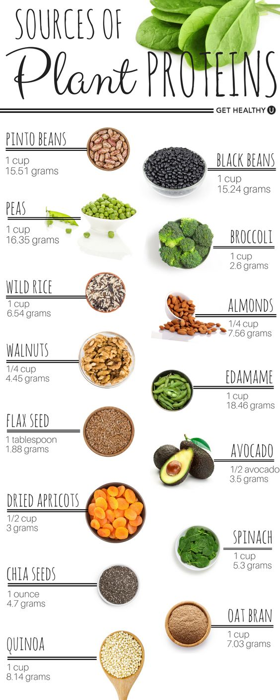 sources of plant proteins