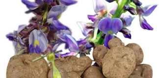Benefits of Pueraria mirifica