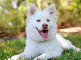 What causes hair loss in dogs? Here is the answer