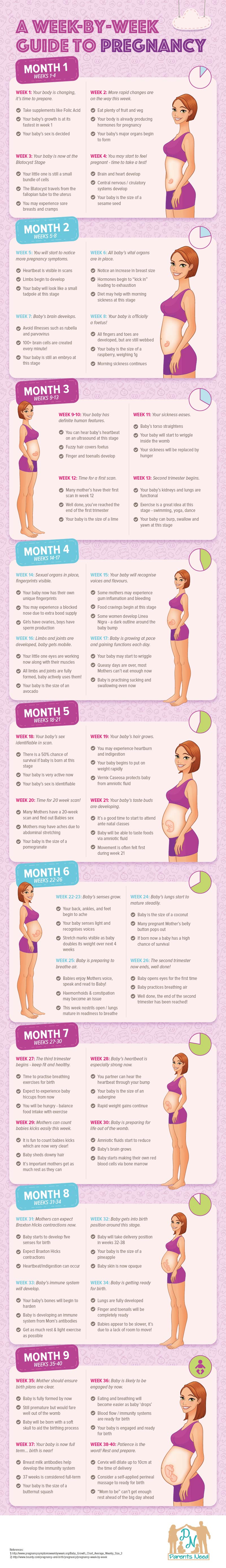 Week by Week Guide to Pregnancy