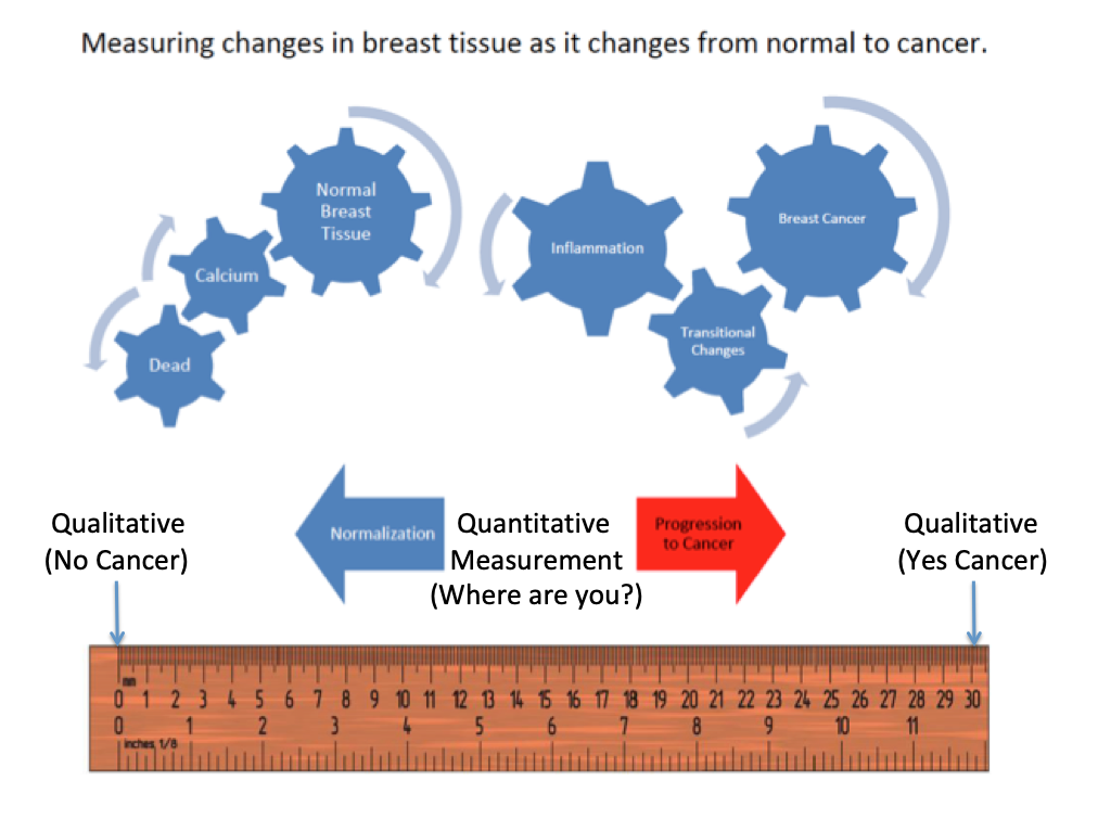 Measuring Changes in Breast Tissues.