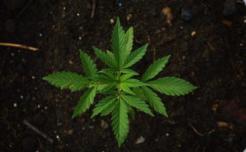 4 Things to Know About Recreational Marijuana