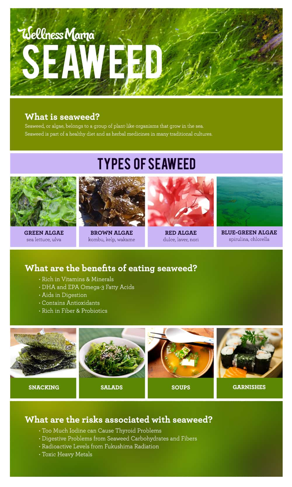 About Seaweed