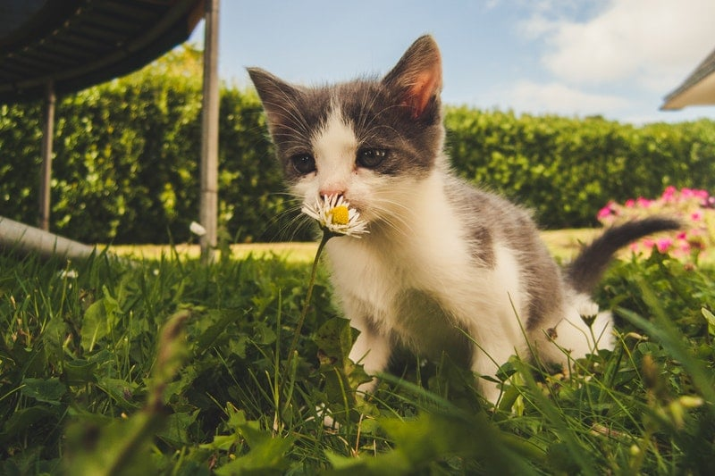 Giving your cat CBD oil