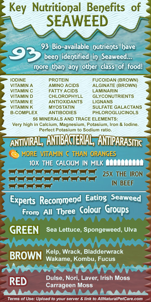 Nutritional Benefits of Seaweed