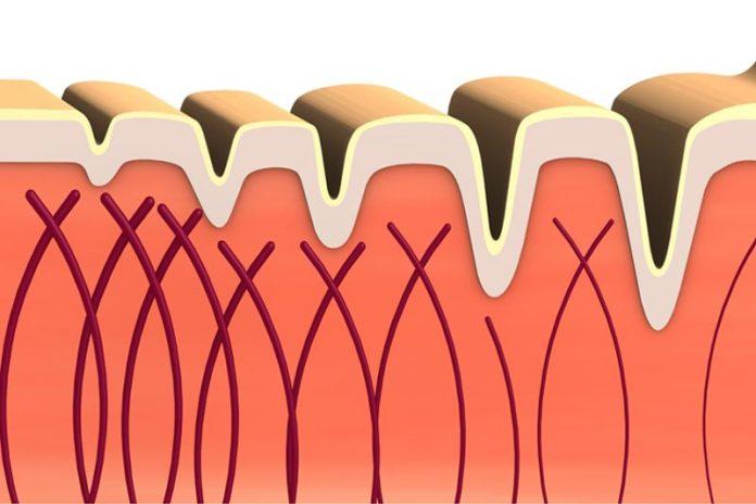 10 Benefits of Using Marine Collagen