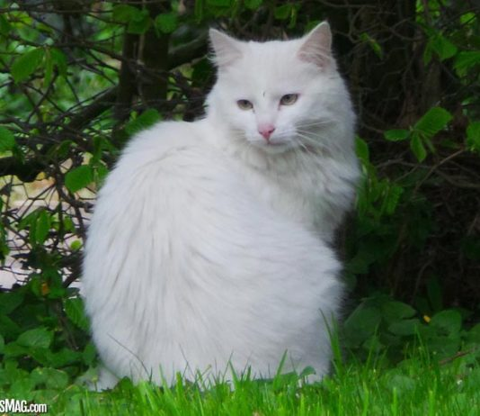 Is CBD Oil For Cats Effective?