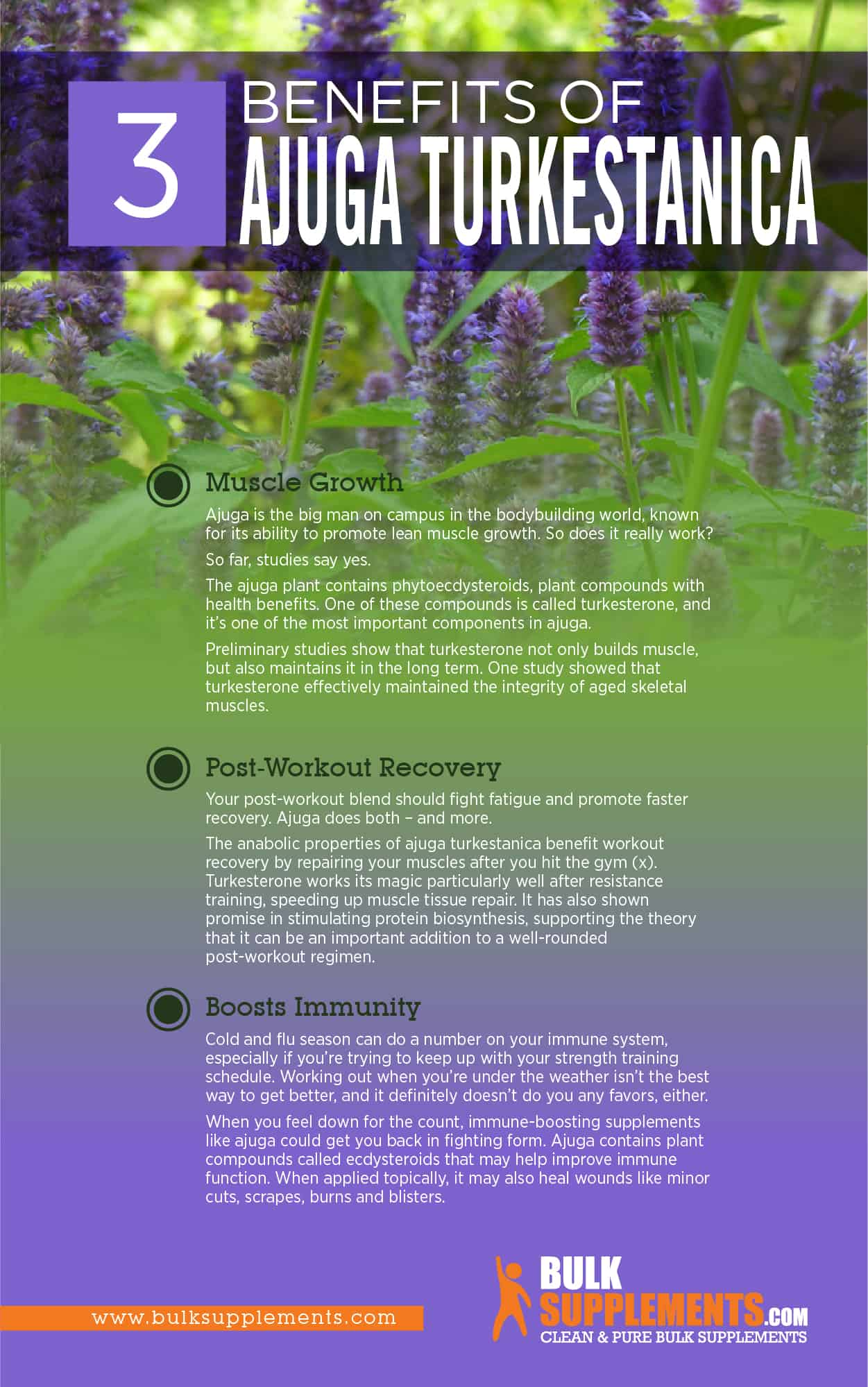 Top 4 Health Benefits of Ajuga Turkestanica