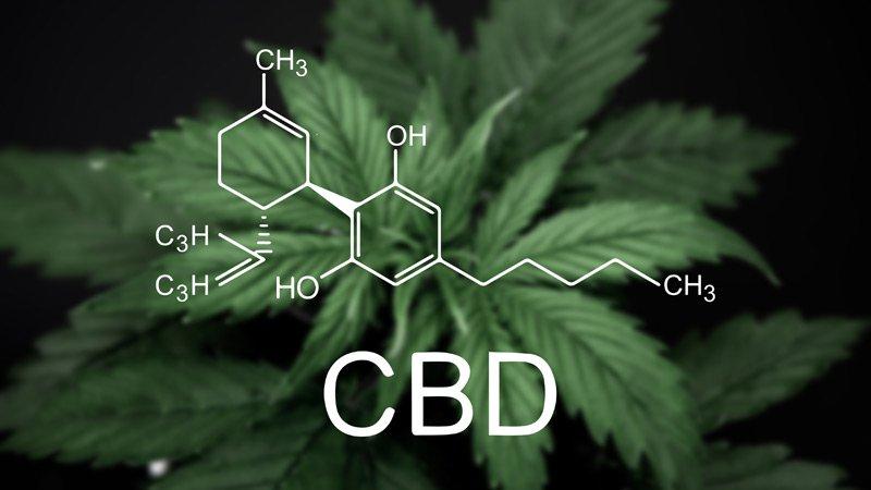 Cannabidiol Marijuana