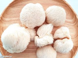 Delicious Recipes Using Lion's Mane Mushroom