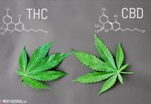 The Difference Between CBD With Thc Or Without It