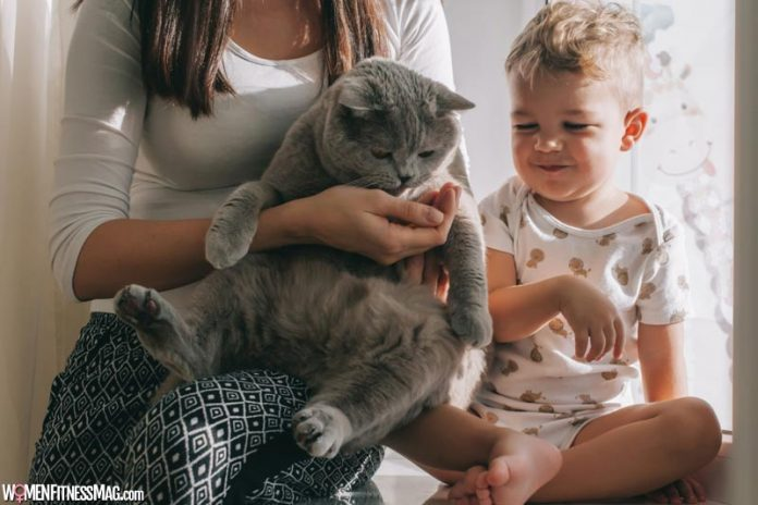 How Can I Tell My Cat Is Pregnant