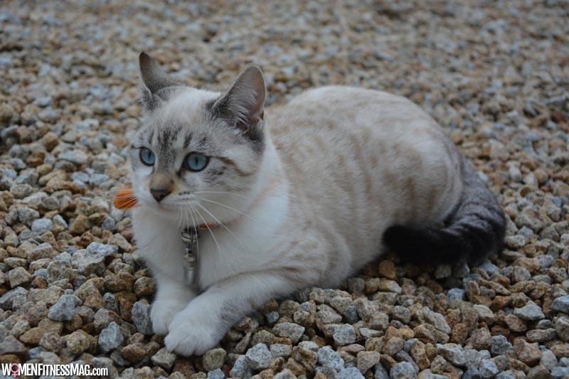 Later Symptoms of a Cat's Pregnancy