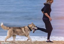 5 Ways to Include Your Dog in Your Workouts
