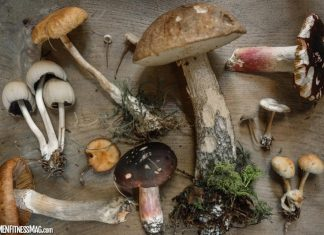 7 Important Reasons To Use Mushroom In Daily Lifestyle