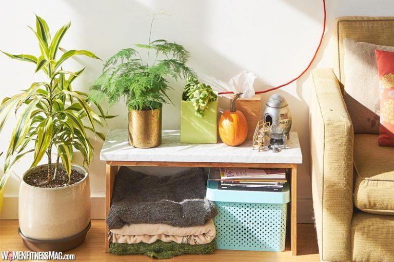 5 Best Indoor Plants For Your Home