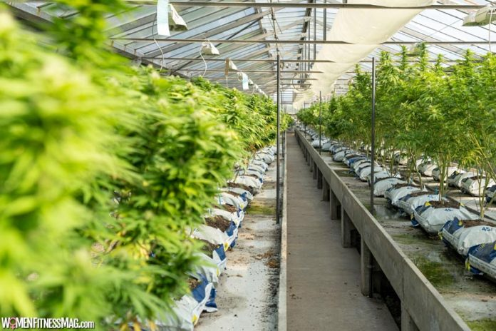 Test Your Hemp Farm Soil in a Third Party Laboratory