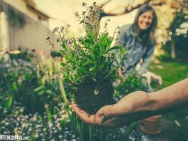 7 Ideal Plants To Grow At Home