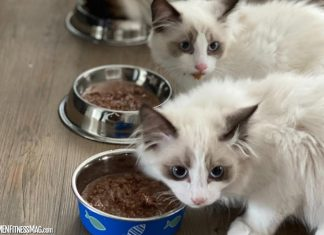 How to Feed Your Kitten: A Beginner's Guide