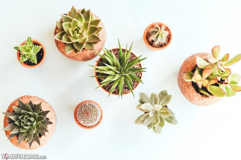 How To Care For Succulents At Home